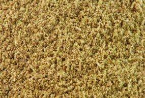 Anis vert poudre