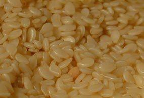 Sésame Blanc - graines
